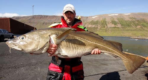 Stefan 19 kg Cod 126 cm