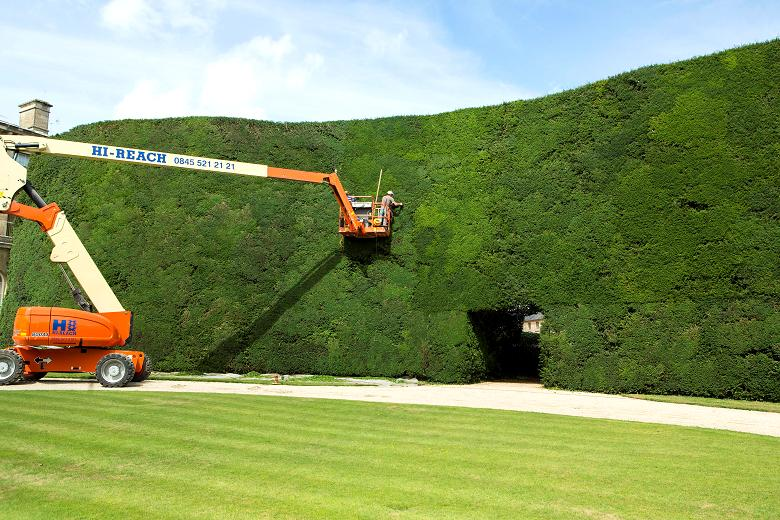 huge-hedge