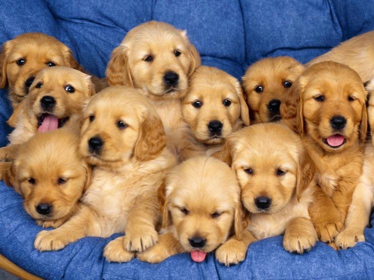 Cute-puppies-dogs-37395739-1600-1200 2.jpg